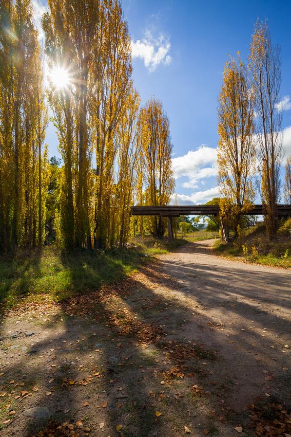 The Poplar Path