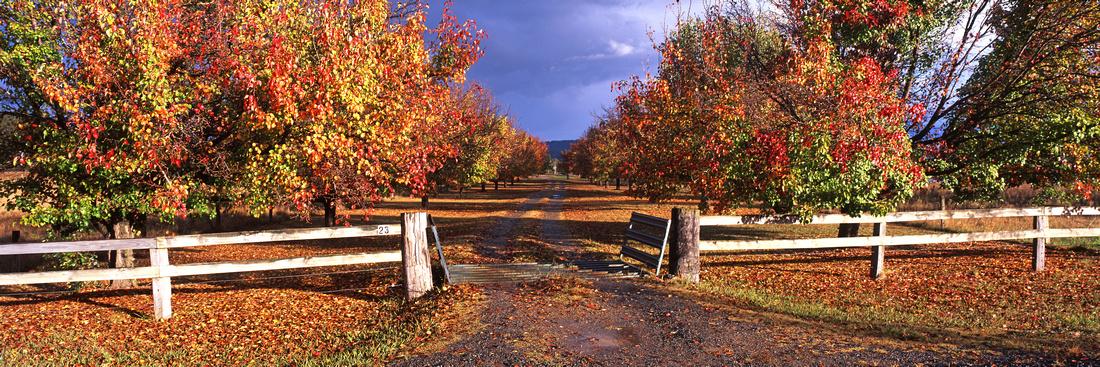 Murrayfield Autumn Lane