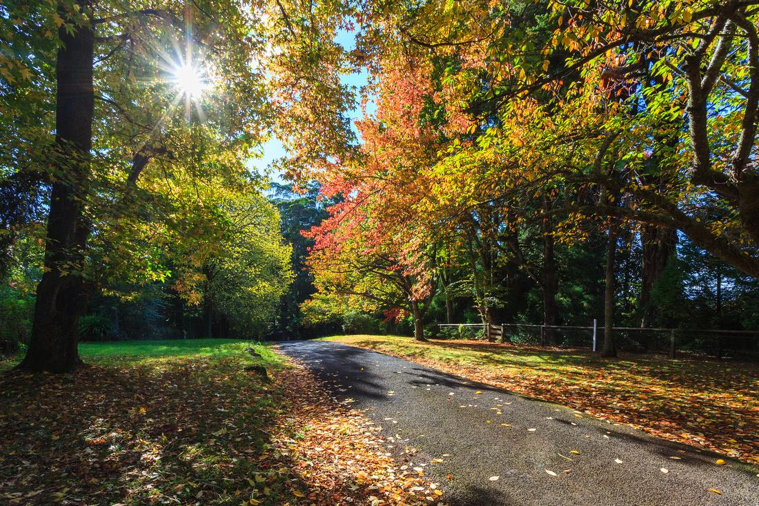 Queen's Avenue, Mount Wilson