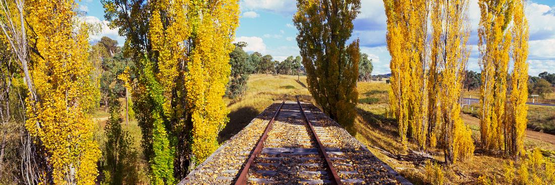 Railway Poplars