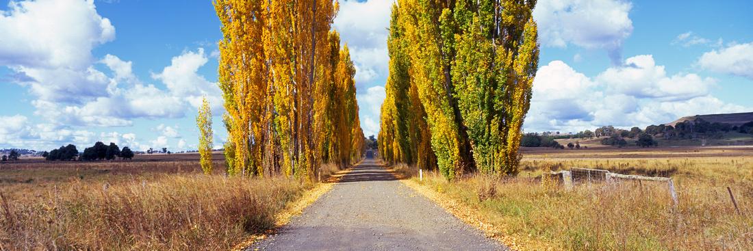 Poplar Highway